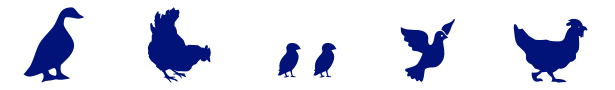 Poultry and Bird Icons